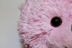 Rosa färger uthärdar rätt royaltyfri foto