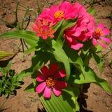 Rosa färger, yelow och gräsplan royaltyfria bilder