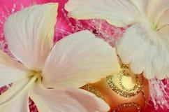 Rosa färgguling och den off-whiteaste hibiskusen för vit guld för blommajulbakgrund blommar och vitt glitter arkivfoto