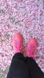 Rosa färgmode Arkivbilder