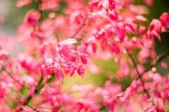 Rosa färgnedgångsidor Royaltyfri Foto