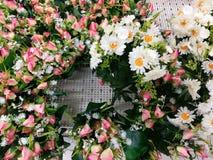 Rosa färgrika dekorativa blommor som är vita och Arkivfoton
