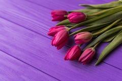 Rosa färgrika tulpan över en purpurfärgad bakgrund, i sänker lekmanna- sammansättning Royaltyfri Fotografi