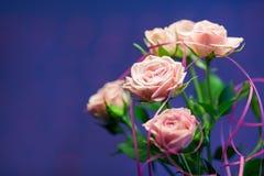 Rosa färgros med blå oskarp bakgrund Royaltyfri Foto