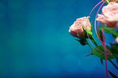 Rosa färgros med blå oskarp bakgrund Royaltyfria Foton