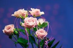 Rosa färgros med blå oskarp bakgrund Royaltyfri Bild