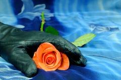 Rosa färgros med den svarta handsken på en blå bakgrund Royaltyfria Foton