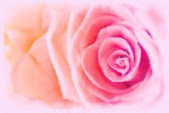 Rosa färgros med illustrationen för stil för målning för vattenfärg Arkivfoto
