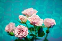 Rosa färgros med turkoscirkelbakgrund Royaltyfri Foto
