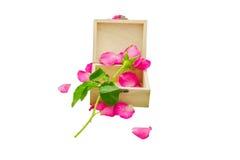 Rosa färgros på den lilla träasken Arkivfoto