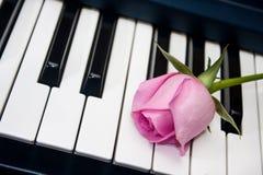 Rosa färgros på pianotangentbordet Royaltyfri Fotografi