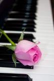Rosa färgros på pianotangentbordet Arkivfoton