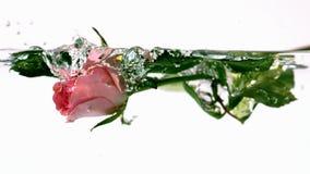 Rosa färgros som faller in i vatten arkivfilmer