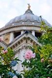 Rosa färgros, Sts Paul domkyrka, London Arkivfoto