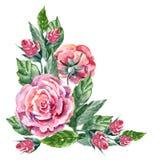 Rosa färgros, vattenfärg, hörn Royaltyfria Bilder
