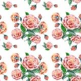 Rosa färgrosen, vattenfärg, mönstrar sömlöst Arkivbilder