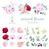 Rosa färgrosen, vit och burgundy den röda pionen, proteaen, den violetta orkidén, vanliga hortensian, klockblomma blommar Royaltyfri Foto