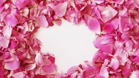 Rosa färgroskronblad gör en hjärta att forma för valentindag, stoppar rörelseanimering