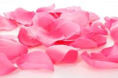 Rosa färgroskronblad på vit Royaltyfri Foto