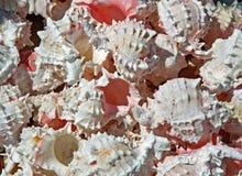 Rosa färgskal som samlas i havet Arkivbild