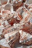 Rosa färgskal som samlas i havet Arkivfoto