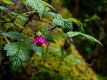 Rosa färgskatt Fotografering för Bildbyråer