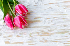 Rosa färgvårtulpan på den vita Wood tabellen Royaltyfria Foton