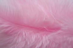 Rosa fågelfjädrar Royaltyfri Fotografi