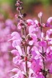 Rosa Farbblumenstrauß von Blumen in der Wiese Magische rosa Blume auf Co Lizenzfreie Stockbilder