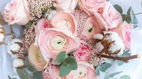 Rosa Farbe der Butterblumeblumen-Nahaufnahme leicht stockfotos