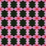 Rosa Farbe der Hibiscusblume in voller Blüte nahtlos lizenzfreie abbildung