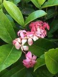 Rosa Farben Stockbild
