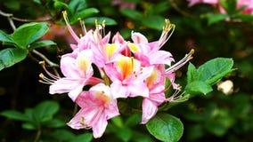 Rosa Feldblumen auf dem Gebiet Stockfotografie