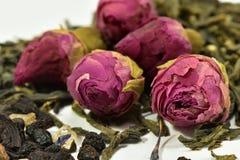 Rosa, fiore, tè, germogli, tè dai germogli delle rose Fotografie Stock Libere da Diritti