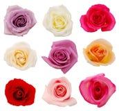 Rosa fiorisce fiori fotografia stock libera da diritti