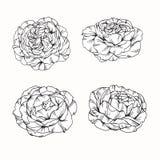 Rosa fiorisce il disegno e lo schizzo con linea-arte su backgroun bianco Fotografie Stock Libere da Diritti