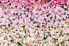 Rosa fiorisce il fondo, struttura Fotografia Stock