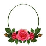 Rosa fiorisce la composizione e la struttura ovale Fotografia Stock