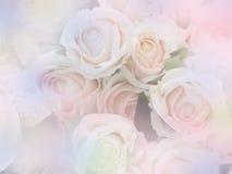 Rosa fiorisce lo stile morbido con effetto d'annata del filtro fotografia stock libera da diritti