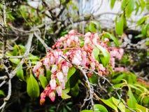 rosa fjäder för blommor Royaltyfri Fotografi