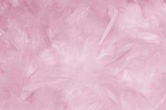 Rosa fjäderbakgrund - materielfoto Royaltyfri Fotografi