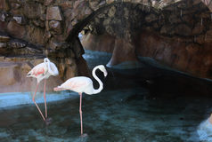 Rosa Flamingo Stockfotografie