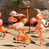 Rosa Flamingo-Bündel Stockbilder