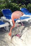 Rosa Flamingo, der ein coctail trinkt Stockfoto