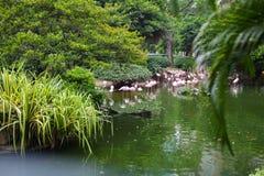 Rosa Flamingo, der im Wasser mit Reflexion steht Lizenzfreie Stockfotografie