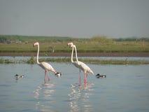 Rosa Flamingo-Dreiergruppe lizenzfreie stockfotografie