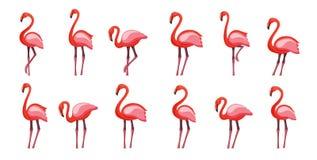 Rosa Flamingo eingestellt, Vektorillustration lokalisiert auf weißem Hintergrund vektor abbildung