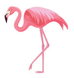 Rosa flamingo på en vit bakgrund Royaltyfri Illustrationer