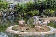 Rosa flamingo p? sj?n med en vattenfall i den Kuala Lumpur f?geln parkerar royaltyfri fotografi