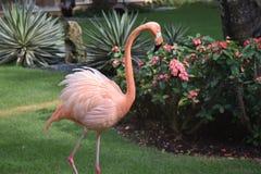 Rosa flamingo som betalar oss ett besök royaltyfri foto